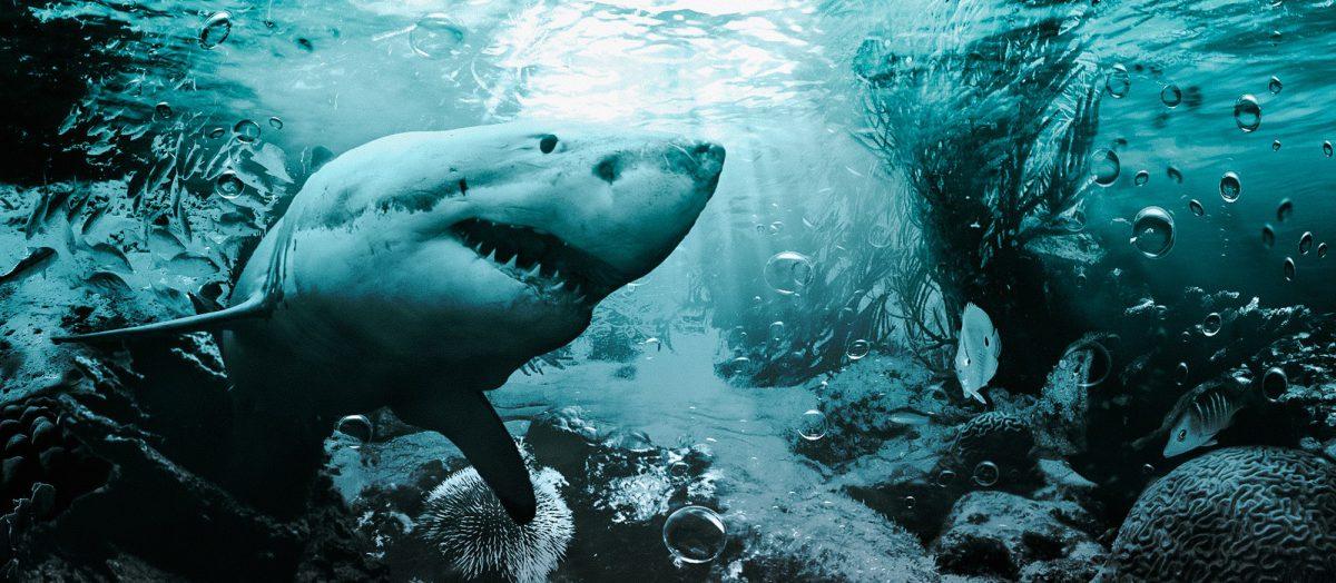 Underwater Shark - Digital Art